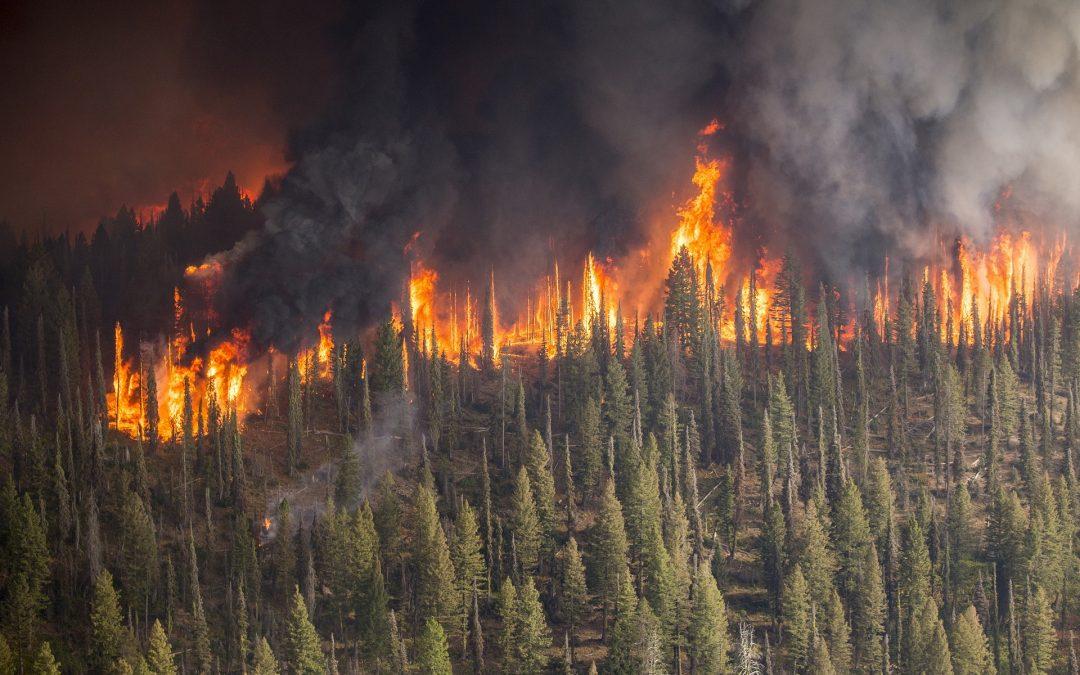Prevenció d'incendis Ràdio Natura