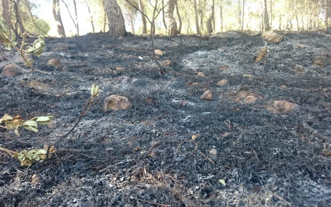 """L'incendi de Monòver ha afectat a """"pins xicotets, matolls i herba baixa"""" Successos"""