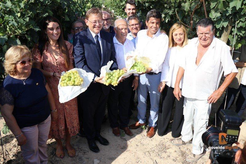 El President de la Generalitat, Ximo Puig, corta el primer racimo, que inicia la campaña de la Uva de Mesa del Vinalopó con Denominación de Origen Notícies de proximitat